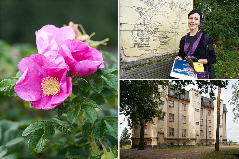 Kolmen kuvan kollaasi, kurtturuusun kukkia, Elina seisoo ison kartan edessä, kasarmirakennus.